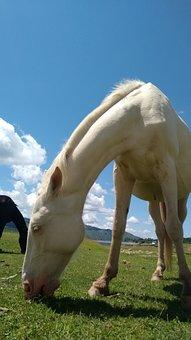 Horse, Animal, Nature, Colt, Landscape, Green
