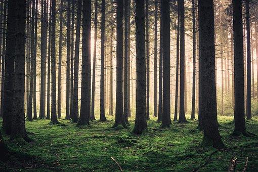 Forest, Fog, Trees, Autumn, Nature, Nebellandschaft