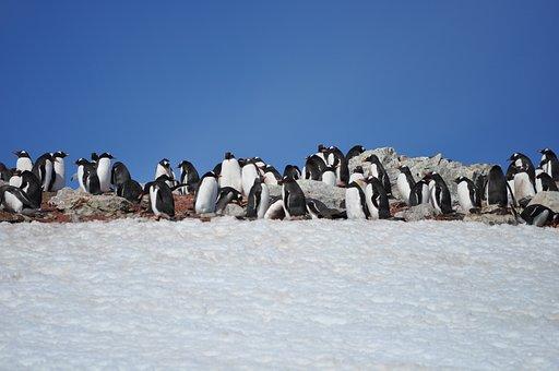 Penguins, Antarctica, Blue Sky, Wild, Animal, South