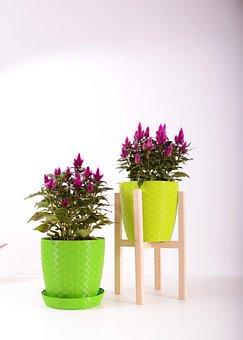 Plants, Flowerpot, Plastic, Color, Colorful, Pot