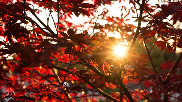 Autumn, Sun, Evening, Red, Red Leaves