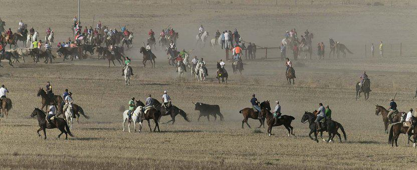Bulls, Horses, Closures, Field, Spain, Rider, Spur