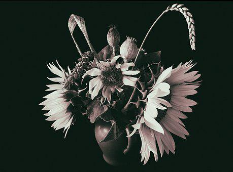 Flower, Sunflower, Economic Plant, Flower Of Sunflower