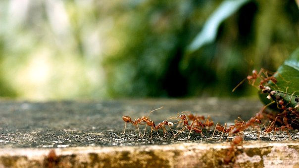 Ants, Ant Groups, Team, Teamwork
