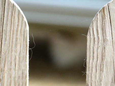 Wooden Fences, Palisade, Garden