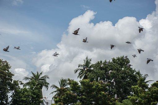 A Flock Of Birds, Sky, Nature, Lagoon, Cloud, Tree
