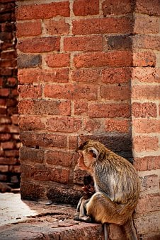 Monkey, Animals, Relax, Nature, Fast, Mammal, Clamber