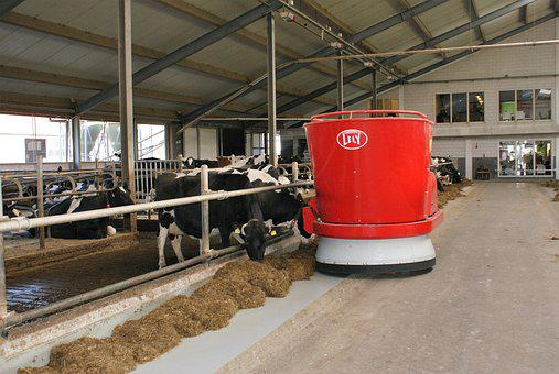 Dairy Farm, Farm, Robot, Lely, Cows