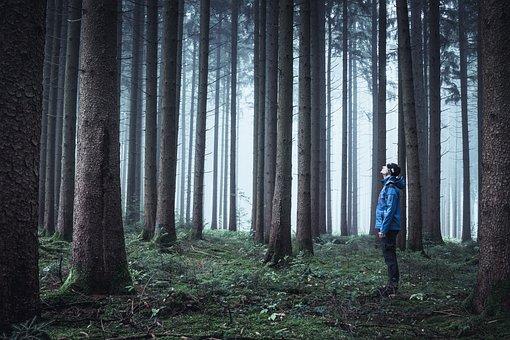Fog, Forest, Trees, Nature, Autumn, Mood