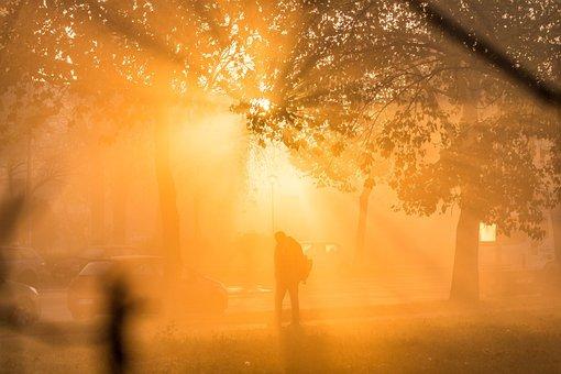 Mist, Morning, Fog, Foggy, Tree, Outdoor, Sunrise, Sun