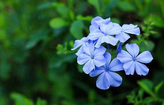 Blue Flower, Nature, Garden, Bright, The Dusky Fog