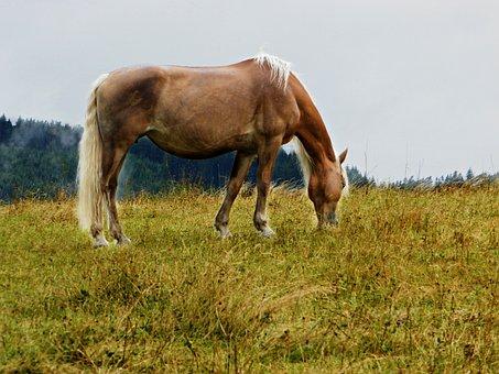 Haflinger, Pasture, Horse, Coupling, Graze, Meadow