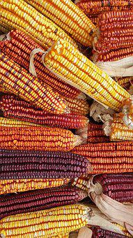 Corn, Seeds, Agriculture, Grains, Tenon, Cereals, Field