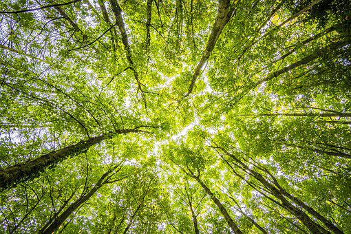 Forest, Trees, Perspective, Bright, Green, Beautiful