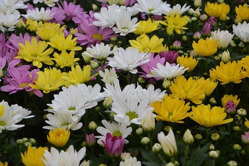 Yellow Flowers Roses, White, Yellow Chrysanthemums