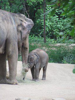 Baby Elephant, Mother Elephant, Zoo, Feeding Time