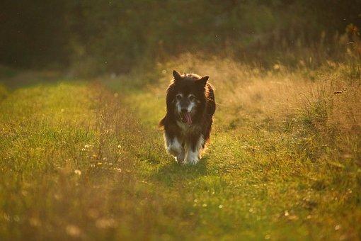 Dog, Autumn, Nature, Border Collie, Border, Herding Dog