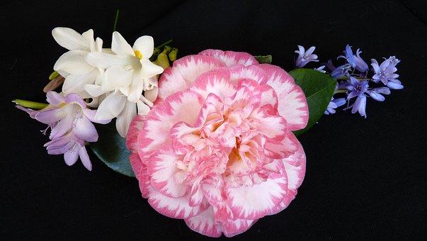 Camellia, Bluebell, Flowers