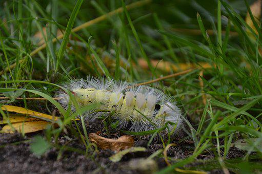 Nature, Caterpillar, Insect, Hairy