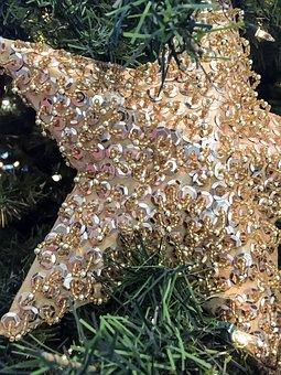 Star, Christmas, Decorations, Festival, Fir, Lights