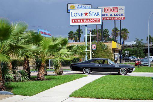 Classic Car And Palm Trees, Ford, Mustang, Black Duster