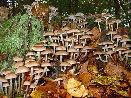 Mushrooms Autumn, Forest, Nature, Wood, Coprin, Foam
