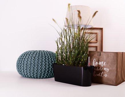 Plants, Flowerpots, Green, Grow, Garden, Nature