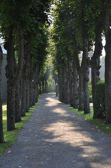 Tree, Lined, Path, Walkway, Green, Pathway, Plant