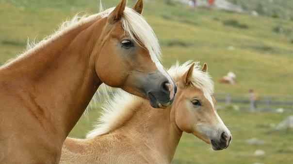Animals, Horses, Nature, Horse Head, Animal World, Head