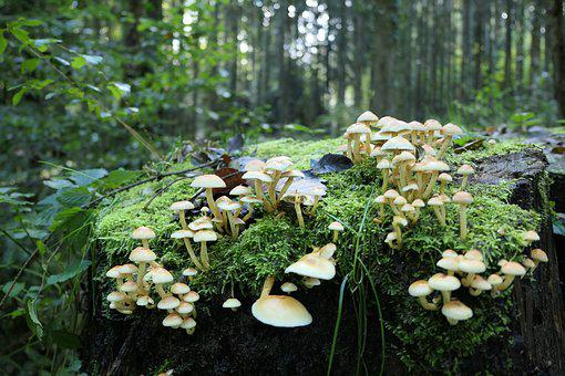 Moss, Mushrooms, Forest, Nature, Tree Stump, Moist