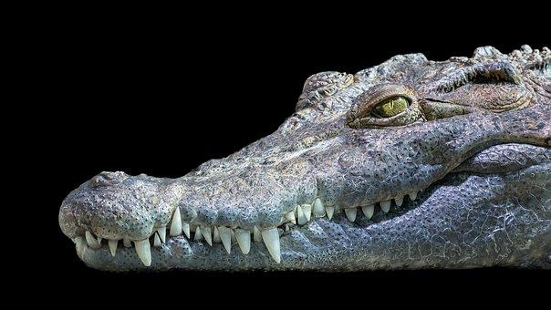 Crocodile, Philippines, Freshwater