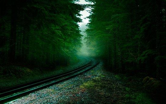 Forest, Railway, Sleepers, Tree, Pine, Rails, Trees