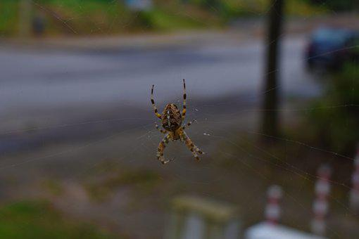 Spider, Close, Insect, Nature, Animal, Network, Cobweb