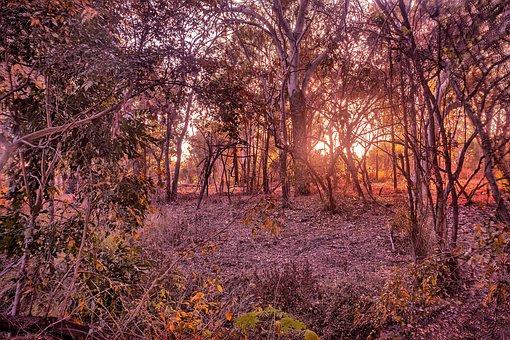 Bush Sunrise, Louisa Creek, Australian Bushland