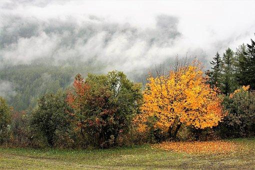 Autumn, Yellow Leaves, Collapse, Zamgielnie