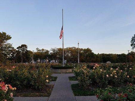American Flag, Rose, Garden, Flag