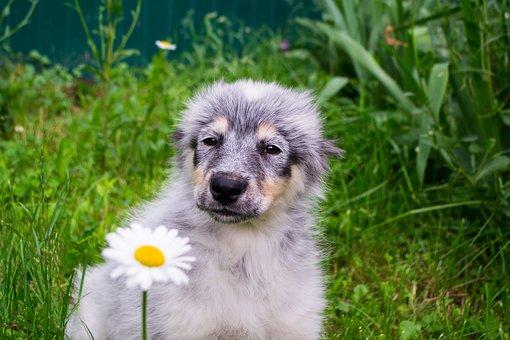 Puppy, Beautiful, Homeless, Furry