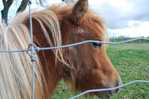 Mini Pony, Horse, Nature