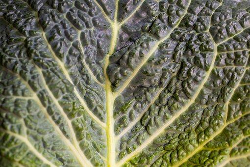 Kohl, Leaf, Head Cabbage, Winter Vegetables, Savoy