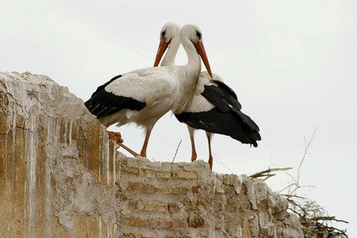 Storks, Marrakech, Love Game