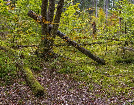 Forest, Forest Floor, Overgrown, Nature, Unaffected