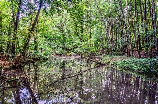 Water, Mirroring, Reflection, Lake, Pond, Bach, Creek