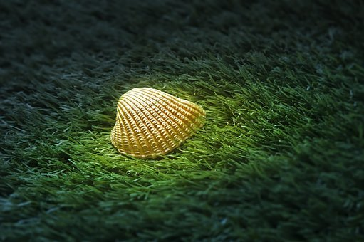Sea Shell, Oyster, Shell, Close-up, Golden, Sea, Grass
