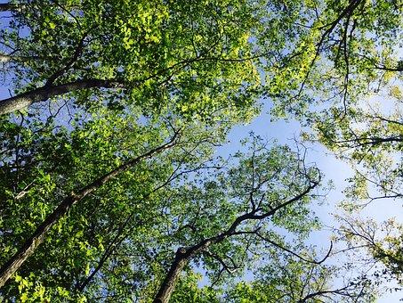 Trees, Leaves, Foliage, Sky, Green, Blue, Nature