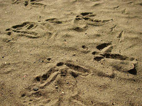 Earth, Footprints, Nature, Soil, Clay, Dry, Floor