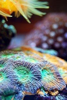 Coral, Reef, Sea, Underwater, Water, Marine, Aquatic