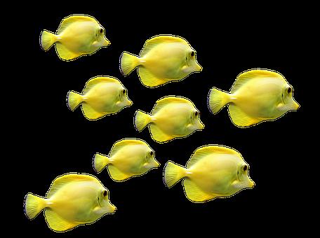 Fish, Fish Swarm, Underwater World, Sea, Meeresbewohner