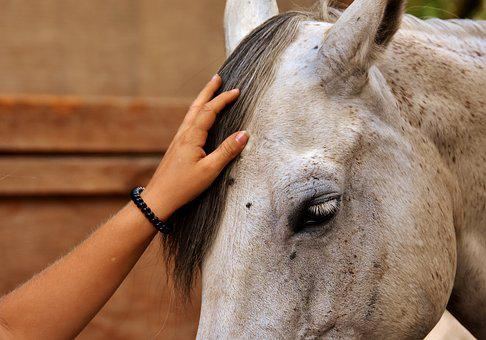 Love For Animals, Horse, Stroke, Dear, Sweet, Animal