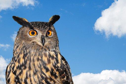 Owl, European, Bird, Wildlife, Nature, Eurasian, Prey