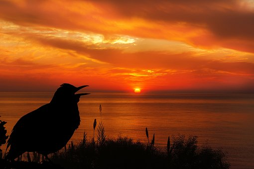 Sunset, Bird, Blackbird, Silhouette, Sky, Orange, Black